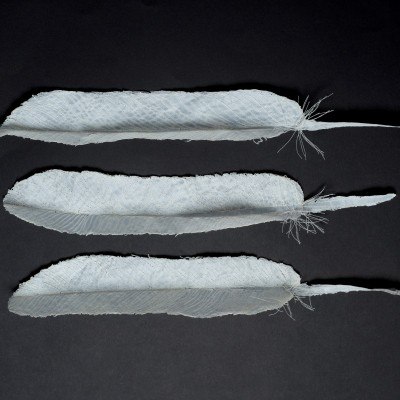 Carole Bury. Bewick Flight Feathers. Paper and Embroidery