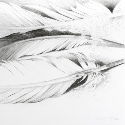 Carole Bury. Flight Feathers. pencil